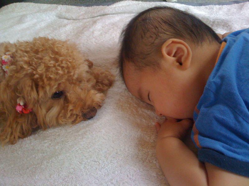 犬とお昼寝