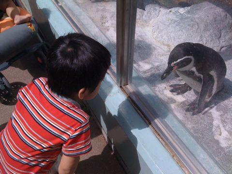ガラガラ動物園